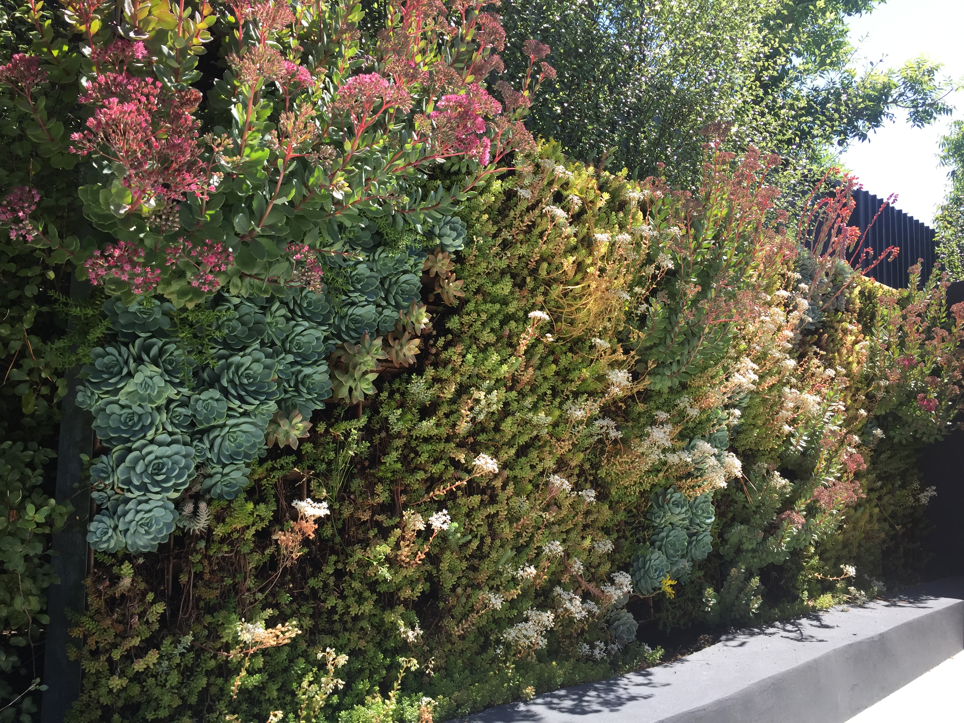 Monarch Gardens | Living Walls